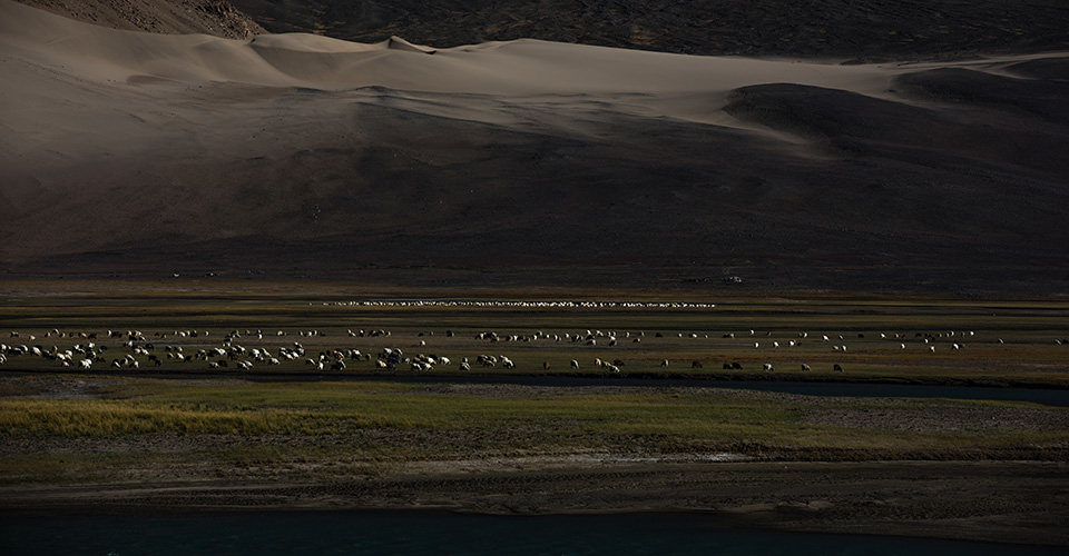 changthang-nomads-photography-3