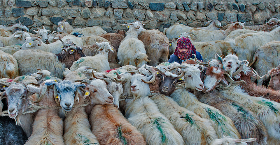 changthang-nomads-photography-6