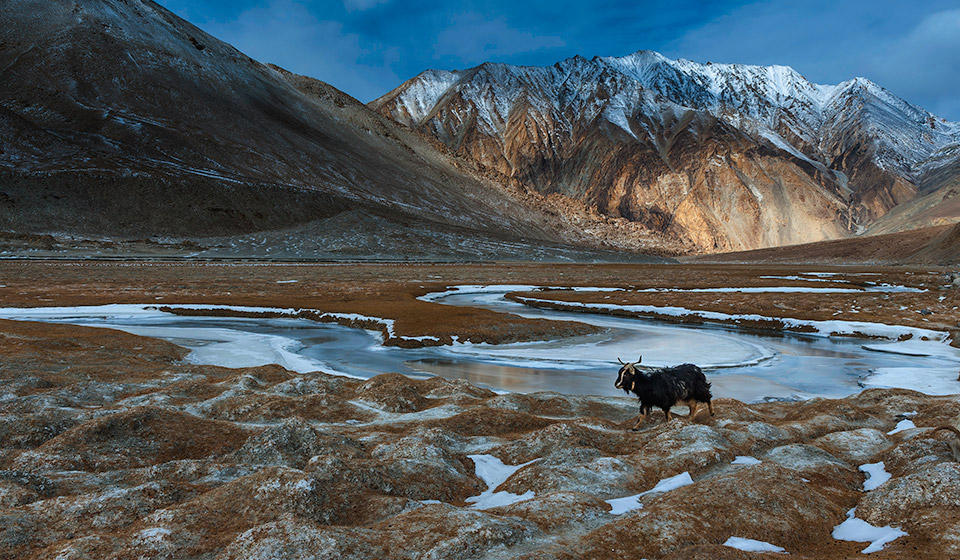 ladakh-winter-122