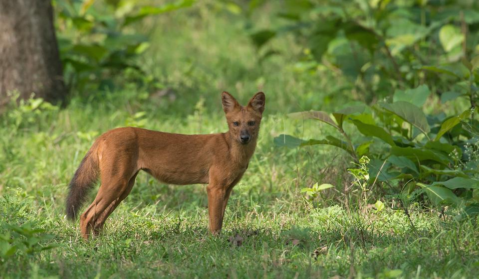 Wildlife Photography Tour of Kabini (Nagarhole National Park)